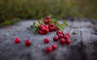 Arctic Autumn is for sale